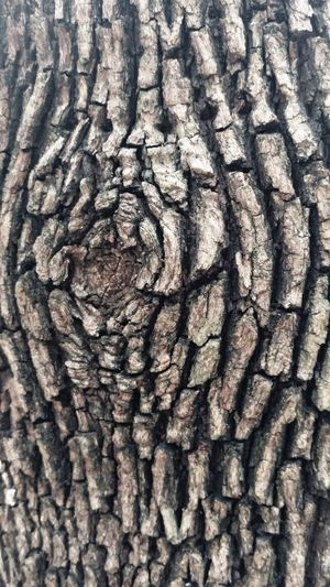 Tree Trunk Textured  Pattern Rough Close-up Nature No People Ideaofage Forests Awalkinthewild Wood - Material Artphoto Blackandwhitephotography Beauty In Nature Rugged Country