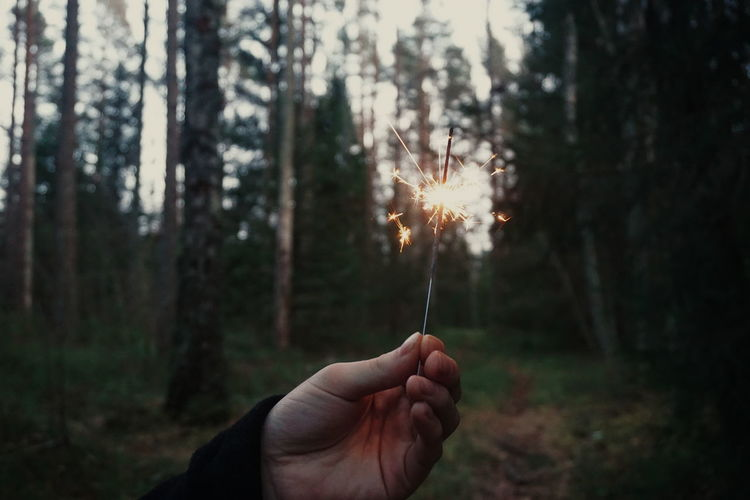 Close-Up Of Man Holding Sparkler In Forest