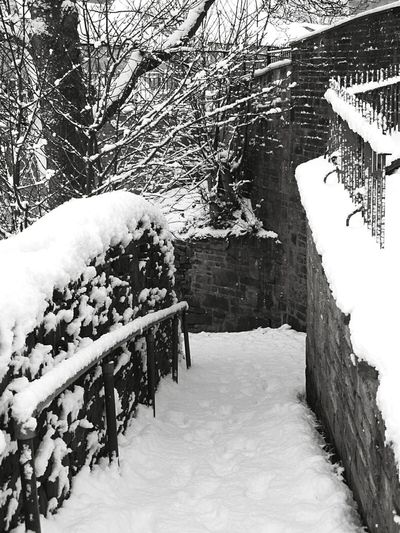 How You Celebrate Holidays crunching about in winter snow Snow Snowy Day Snowy Trees Landscape Snowy Landscape Snowy Path Trees Tree TreePorn Monochrome Black And White Black And White Landscape Snowscape Path Wall Footprints In The Snow Footprints White Bricks Stone Eyeem Snow EyeEm Best Shots EyeEm Best Shots - Landscape EyeEm Nature Lover