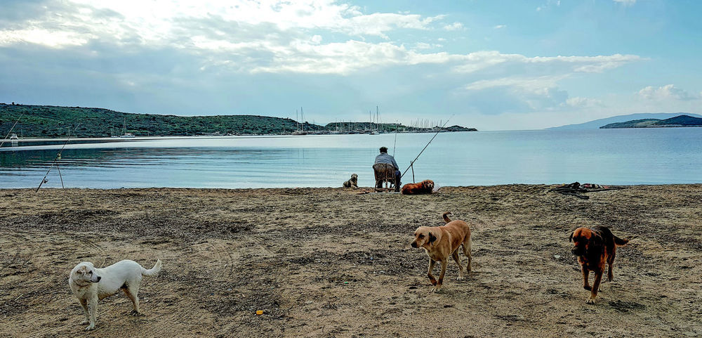 Dogs Freedom Happiness Old Man Peace Peace And Quiet Beach Beauty In Nature Blue Sky Clouds And Sky Day Fishing Horizon Over Water Nature Outdoors Rocks Sand Sea Sea And Sky Seaside Sky Water