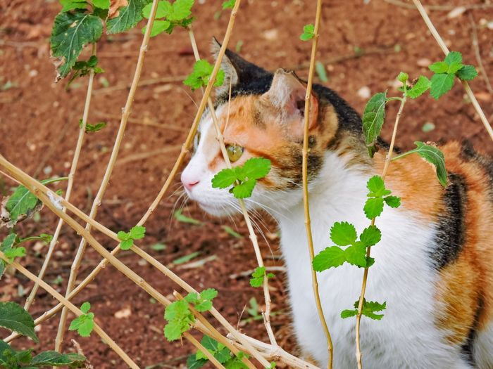 Close-Up Side View Of A Cat Looking Away