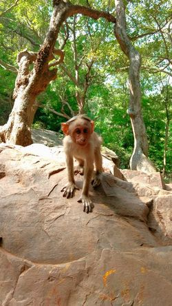 Animal Themes Animals In The Wild Animal Wildlife Monkey EyeEm Gallery EyeEm Random Photography Random Acts Of Photography Eye4photography  Eyeemphotography Nofilters Naturebeautiful Amazing [ Eye4photography  Eye4photography  Eye4photography  Eyemphotography Eye4photography  EyeEm Best Edits Eye4photography  EyeEmBestPics Eye4photography  Monkey Forest Animal Photography Animal Portrait Animal Behavior Animals Posing