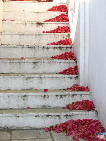 Day Flower Nature No People Outdoors Red Steps Steps And Staircases