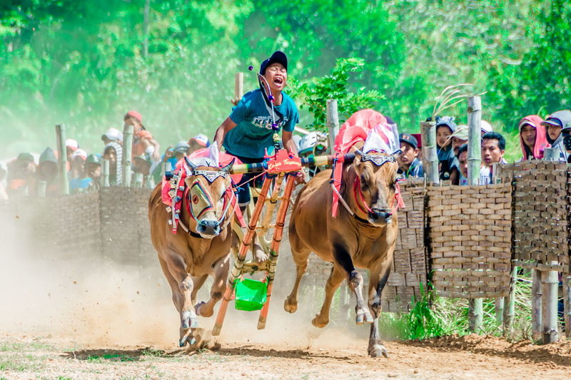 sport Go Higher Sports Race Crowd Competition Horse Racing Gambling Men Young Women Togetherness Riding Jockey