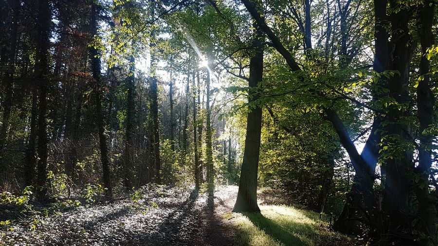 romantic view Forest Photography Sunrays Sunrays Through The Branches Romantic Tree Forest Branch Backgrounds Full Frame Sky Growing Streaming Tranquil Scene Tranquility Calm Idyllic Scenics Countryside Non-urban Scene