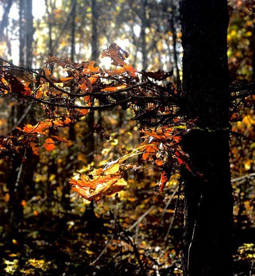 Autumn awe.....