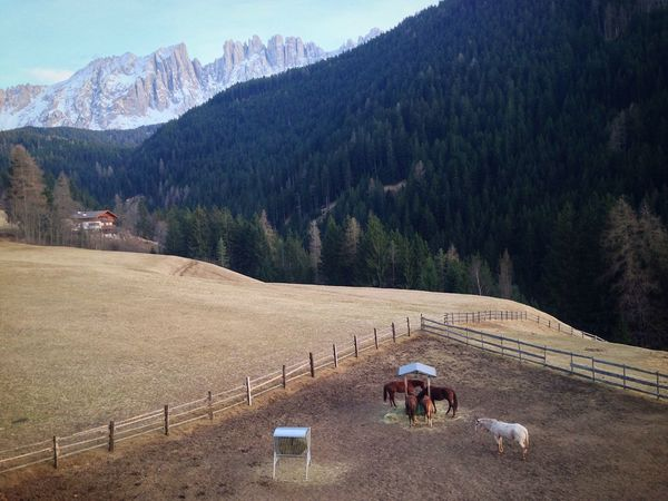 77/365 2017 One Year Project March 18 Latemar Horses South Tyrol Italy Horse Mountain Nature Beauty In Nature Landscape Rural Scene Scenics Real People Mammal Domestic Animals Agriculture Outdoors Occupation Day