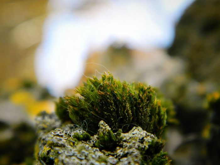 Close-up No People Nature Moss Day Outdoors Focus On Foreground Tree Nature Sky Growth Beauty In Nature Textured