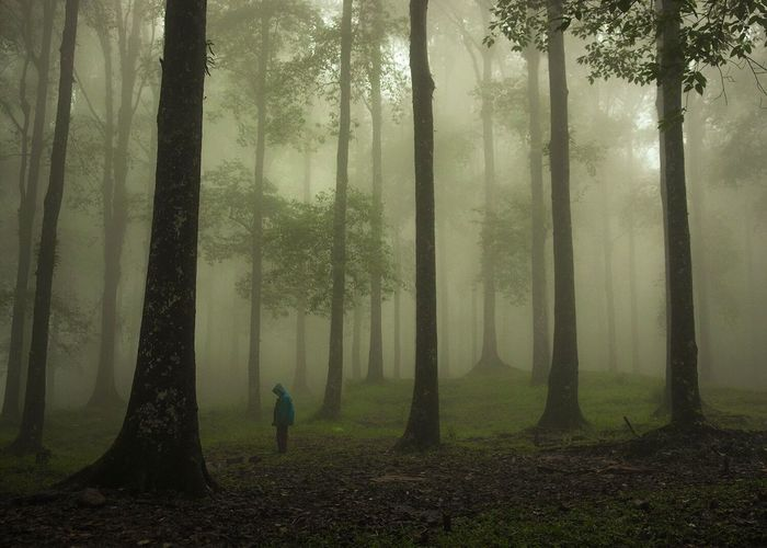 Person standing amidst trees in forest during foggy weather