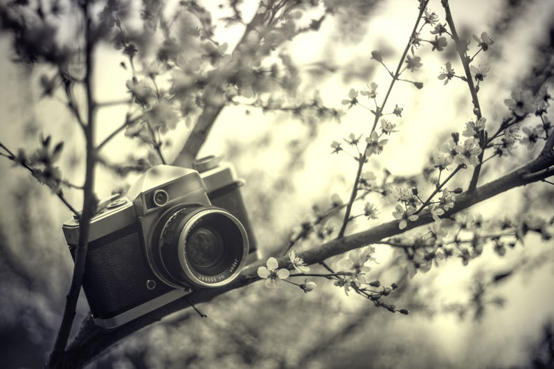 Low angle view of camera and tree against sky