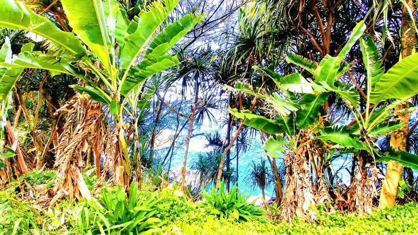 No People Raw Green Color Outdoors Ocean Beach Home Island WOW Blue And Green Focus Plant Life Nature Simple Photography Backgrounds Full Frame Leaf Close-up Grass Green Color Plant Growing Young Plant Blooming Plant Life Fragility In Bloom The Great Outdoors - 2018 EyeEm Awards The Traveler - 2018 EyeEm Awards
