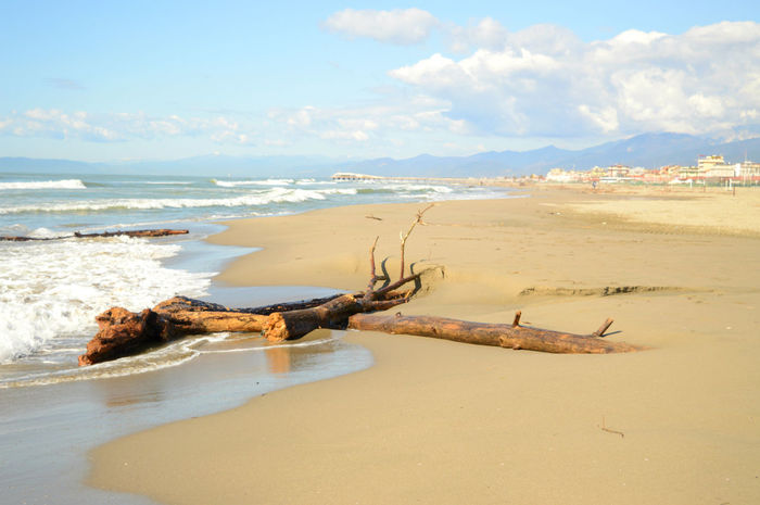 Beach Coastline Horizon Over Water Sand Sea Seascape Shore Tree Water Winter Here Belongs To Me The KIOMI Collection