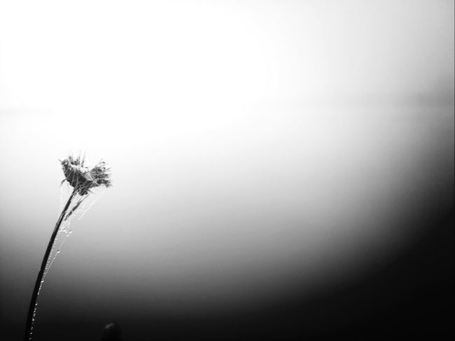 Black And White Photography Foggy Morning Dead Black And White Portrait
