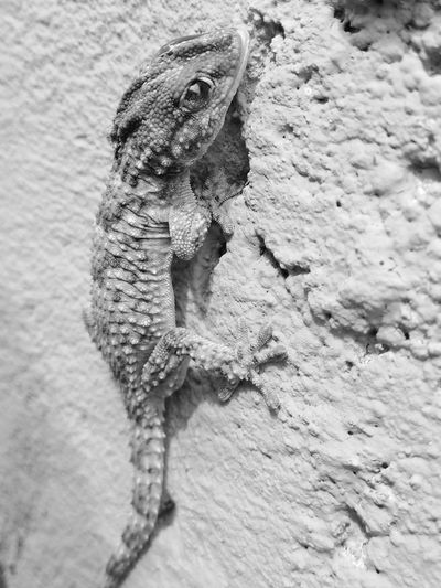 Reptile Textured  Close-up Animal Themes