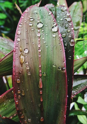 See what my beautiful rains have left for me... Green Green Green!  Leaves_collection Post Rainstorm Indian Monsoon Beautiful Weather It's Raining Outside  Leaves And Flowers Natures Beauty Nature Splash Nature Photography Digital Nomad Exclusive Shot Nature Coloursplash_masters Photoplatonic Photosynthesis Leaf Patterns🍂 Leaf Veins Photopassion Keep Clicking Liveitclickit Pro_shooters Pro_mobile_click Lady Love Clicking On Mobile Photography Photographers_tr Photographers_of_delhi Photographers__hub