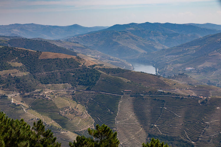 Douro valley landscapes , Portugal Douro  Pattern, Texture, Shape And Form Portugal Beauty In Nature Day Environment High Angle View Idyllic Land Landscape Mountain Mountain Range Nature No People Non-urban Scene Outdoors Plant Remote Scenics - Nature Sky Tranquil Scene Tranquility Tree