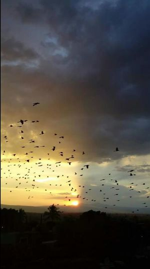 Dayandnight Birds Sunset Beautiful Nature Flying Large Group Of Animals Flock Of Birds Bird Animal Themes Animals In The Wild Animal Wildlife Sky Mid-air Silhouette Dramatic Sky Cloud - Sky No People Nature Vacations Scenics Outdoors Beauty In Nature Day