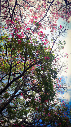Estoy enamorada de está foto. Photography Photooftheday FotoDelDia Fotografia Uruguay Montevideo Flower Sky Tree Backgrounds Branch Full Frame Silhouette Close-up Petal Plant Life Botany