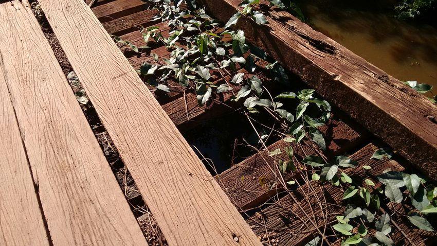 Natureza reclamando seu espaço. Ponte Taken Damaged Bridge