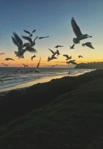 NZ Seagulls Seagull Birds Sun Cloud - Sky Sunset Sky Animal Animal Themes Water Group Of Animals Bird Flying Sea Sunset Land Beach Beauty In Nature Silhouette Flock Of Birds Nature No People