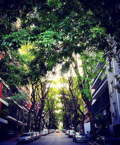 Foliage . Trees Oldtree Nature Street Neighborhood Belgrano Buenosaires Ba Light Sunshine Shade Shades Shadow Oasis Summer Spring Up Instagood Instacool Instadaily Instapic Instamoment