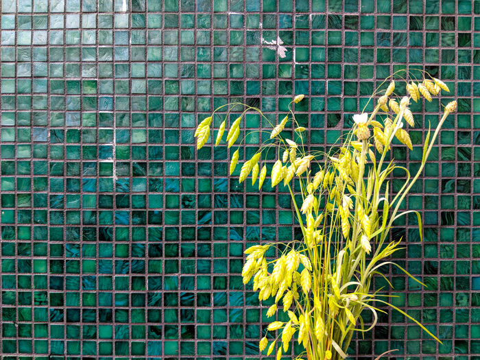 full frame shot of plants against green background Architecture Backgrounds Barrier Beauty In Nature Blue Boundary Built Structure Day Fence Full Frame Green Color Growth Nature No People Outdoors Pattern Plant Turquoise Colored Water Yellow