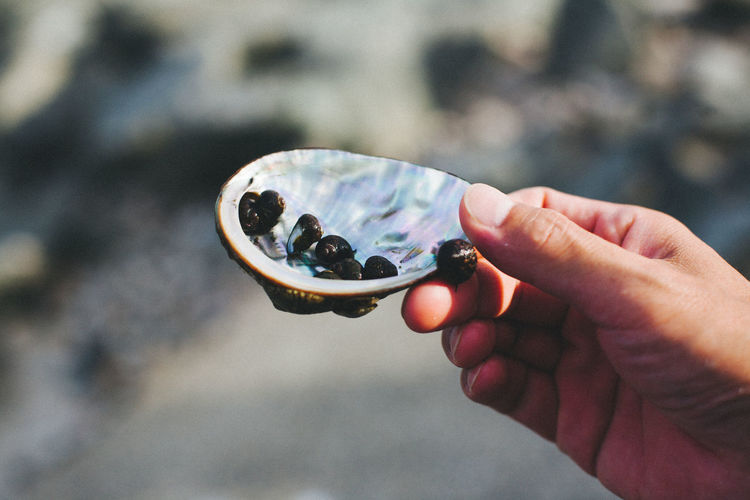 Close-up of human hand holding shells