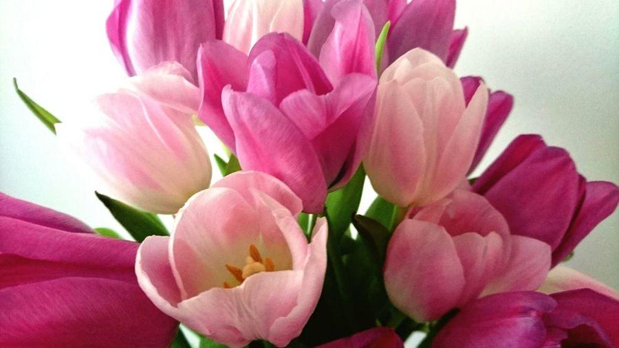 Tulips 🌷🌷