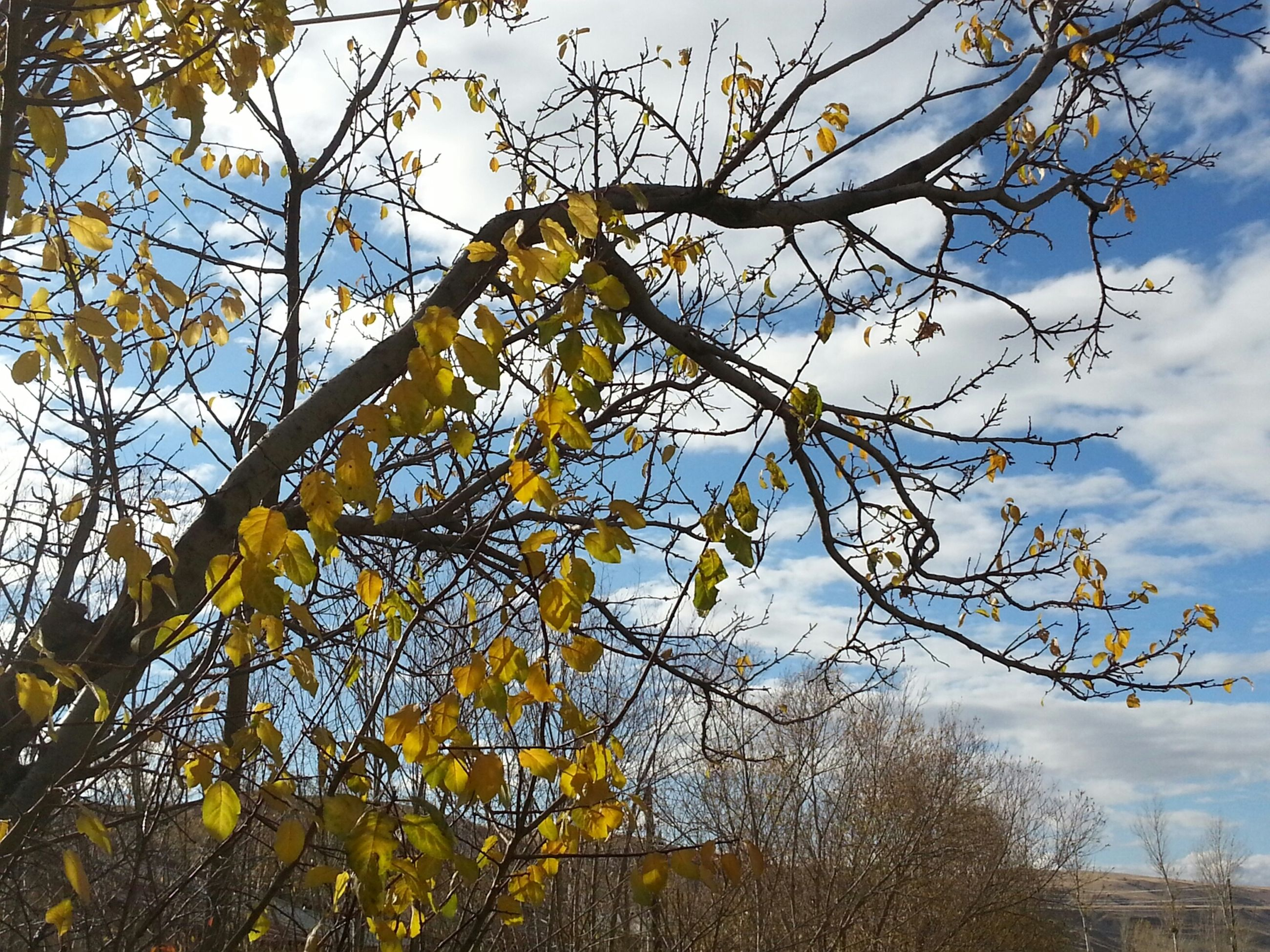tree, low angle view, branch, sky, growth, yellow, nature, beauty in nature, day, leaf, autumn, outdoors, built structure, no people, cloud - sky, tranquility, building exterior, cloud, architecture, bare tree