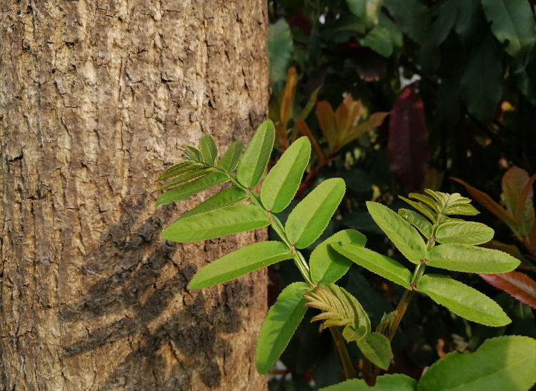 Spring 🌿 Plant