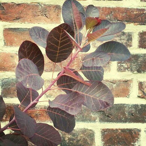 Wall Of Bricks Brickstalker Bricks Leaf