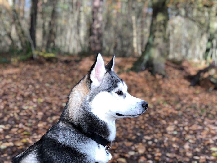 Close-up of dog on tree