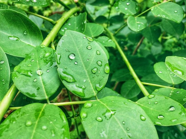 Green Color Leaf Nature Animal Themes Animals In The Wild Close-up One Animal Growth Plant No People Outdoors Frog Water Beauty In Nature Day Reptile Freshness Chameleon