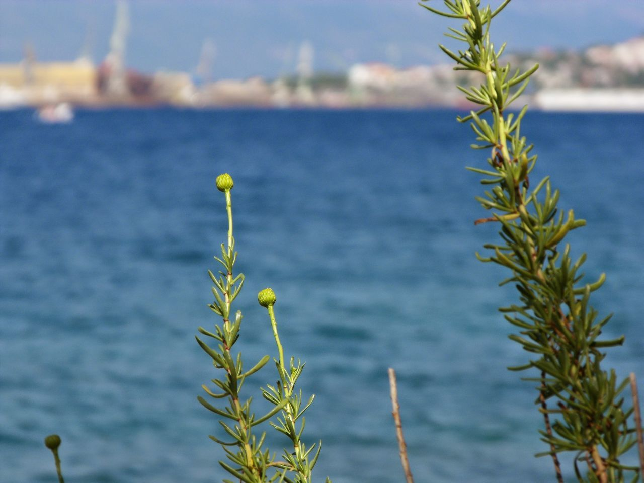 plant, growth, nature, beauty in nature, focus on foreground, water, no people, tranquility, outdoors, leaf, day, close-up, sea, scenics, flower, freshness