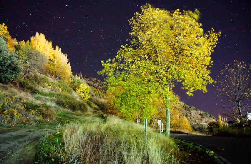 Road amidst trees and plants against sky at night