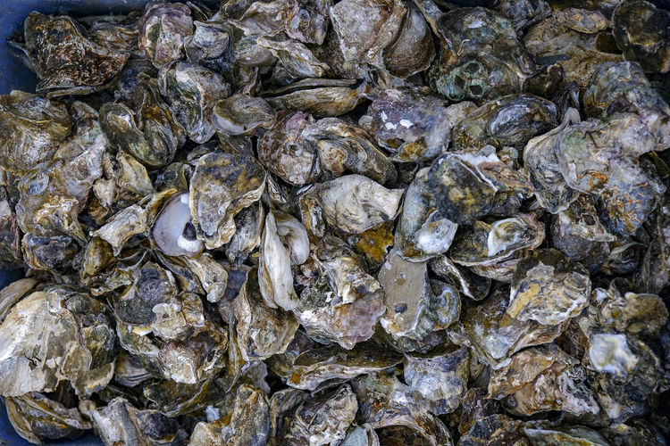 Oysters Abundance Animal Backgrounds Close-up Day Food Food And Drink For Sale Freshness Full Frame High Angle View Large Group Of Objects Marine Market No People Oyster  Oysters Rock Sea Sea Life Seafood Shell Textured  Wellbeing