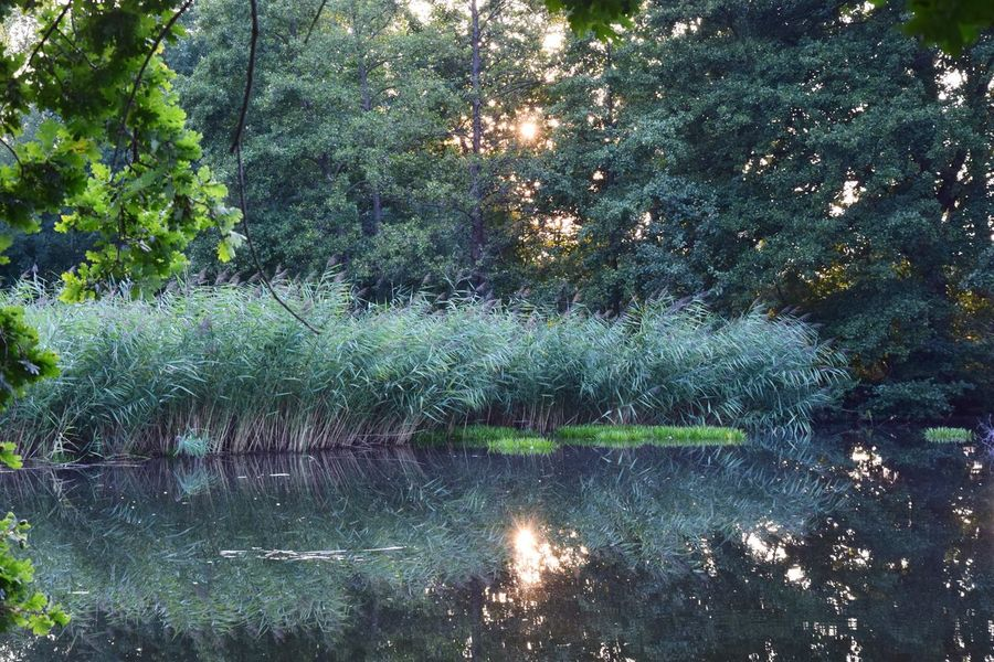 Evening Light Rhinluch Beauty In Nature Day Forest Green Color Growth Land Nature Nature_lovers No People Non-urban Scene Outdoors Plant Reflection River Scenics - Nature Standing Water Tranquil Scene Tranquility Tree Water Waterfront