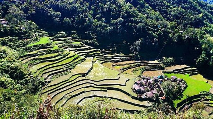 BangaanRiceTerraces With JuanPortrait Pinoywanderer Doyoutravel Theglobewanderer Discoverearth Travel_pic Amazing_pictures Goprouniverse Goworldwide Goprophotography_ Goproph  Gopro