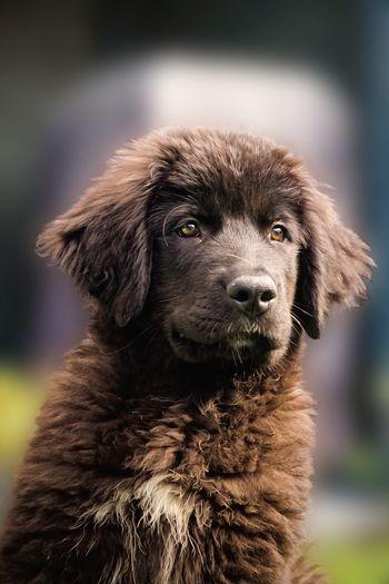 Close-up portrait of dog
