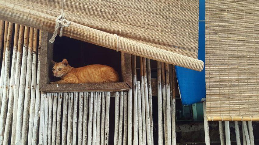 first photo First Eyeem Photo Cat Lovers Lifestyles Bamboodesign Thailand