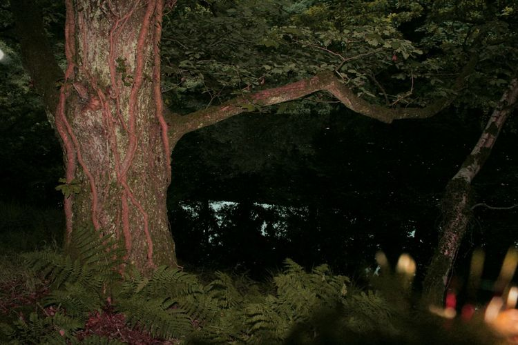 Night Tree Pink Worms Night Forest Taking Photos Check This Out Relaxing Hi! Goodnight