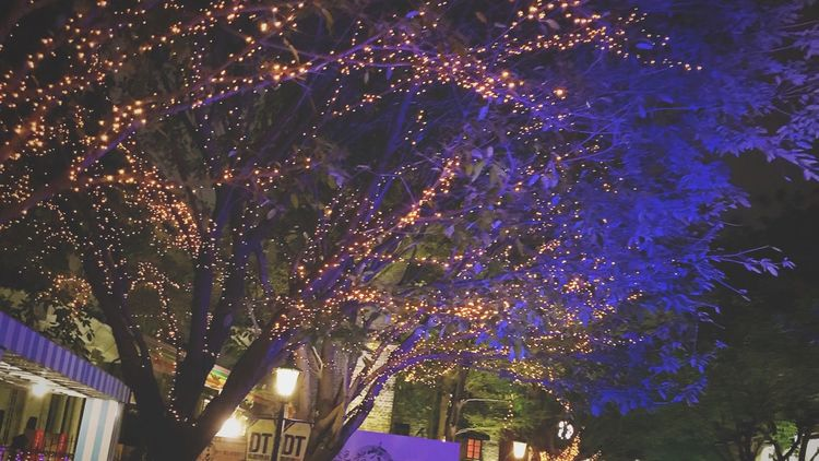 Night Illuminated Tree Outdoors Low Angle View No People Christmas Lights Beauty In Nature