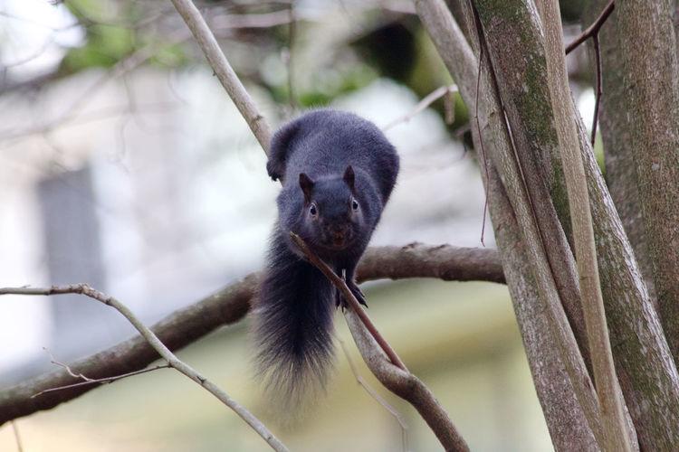 One Animal Animal Themes Animal Tree Animal Wildlife Branch No People Day Outdoors Close-up Squirrel