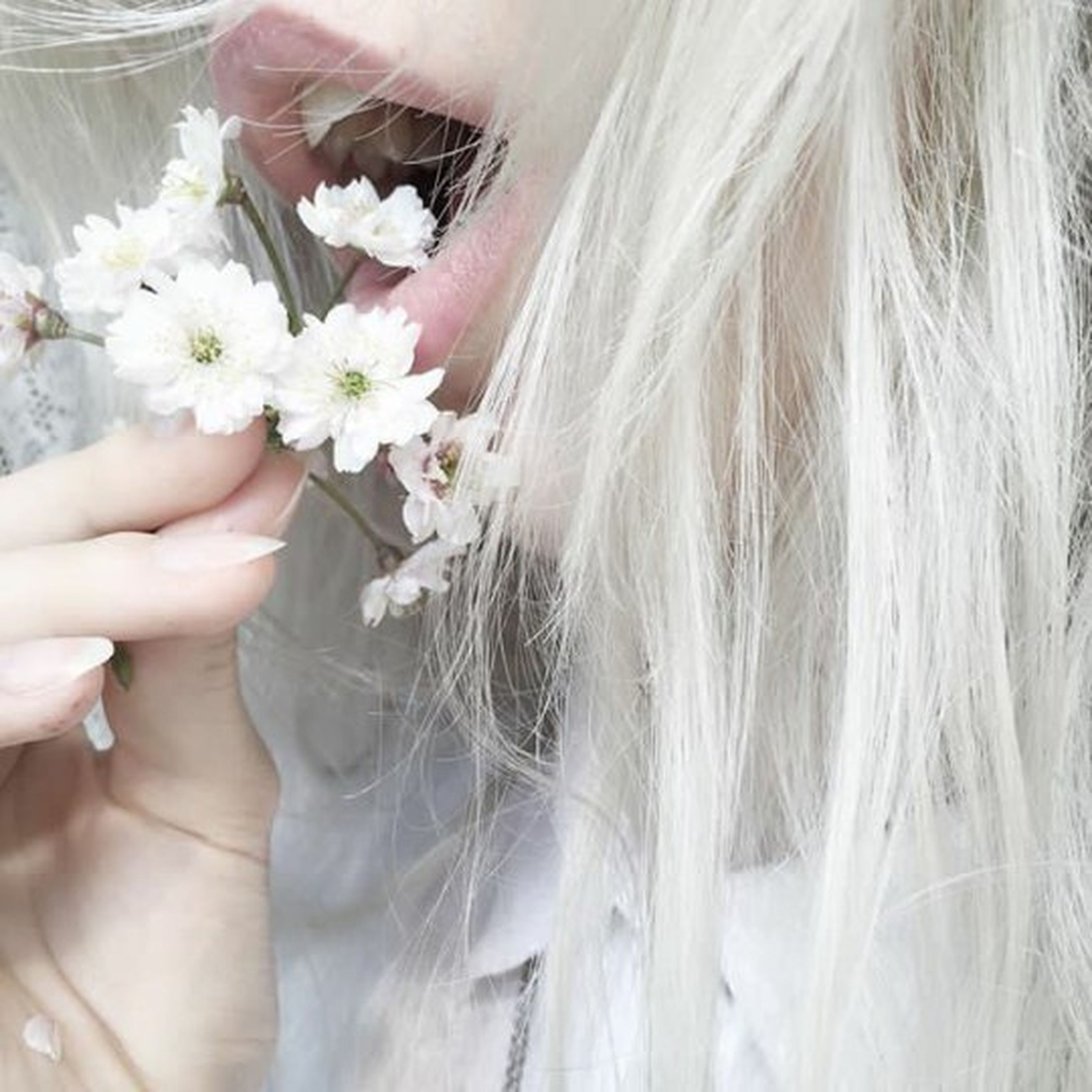 flower, human body part, one person, blond hair, only women, one woman only, adults only, human hand, adult, fragility, people, close-up, holding, young adult, outdoors, sensory perception, women, bride, one young woman only, day, wedding dress, freshness, beautiful woman, flower head