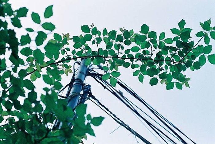 2015.10.09. Dream 35mm Film Filmisalive Minolta Minoltax700 Kodak Kodakfilm Nofilter 필름사진