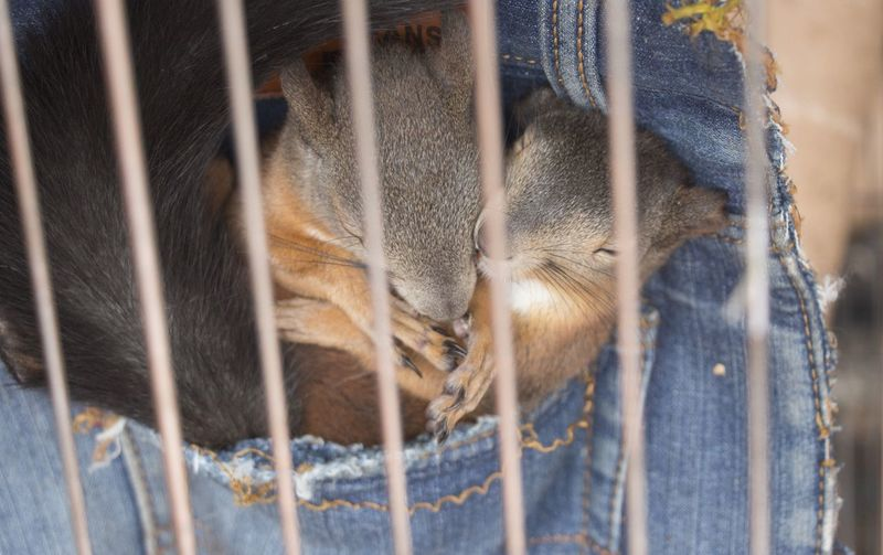 Close-up of squirrels sleeping in cage