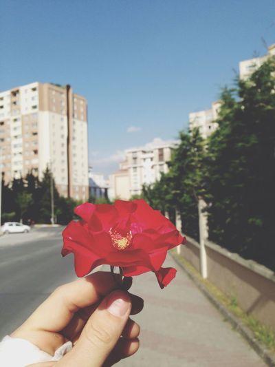 Flower Sun Day Outside