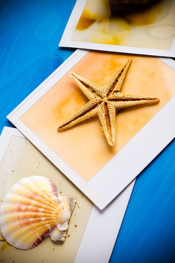 High Angle View Of Shell And Starfish With Picture Frames On Blue Table