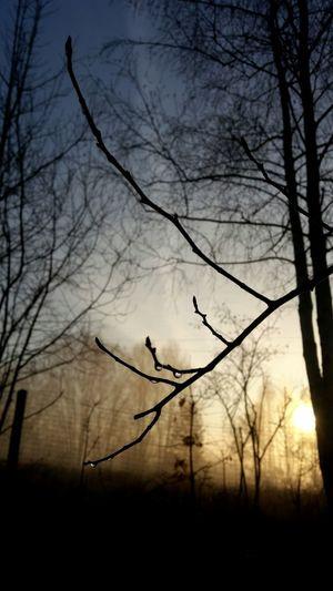 Bird Tree Flying Branch Bare Tree Sunset Spread Wings Silhouette Bird Of Prey Mid-air