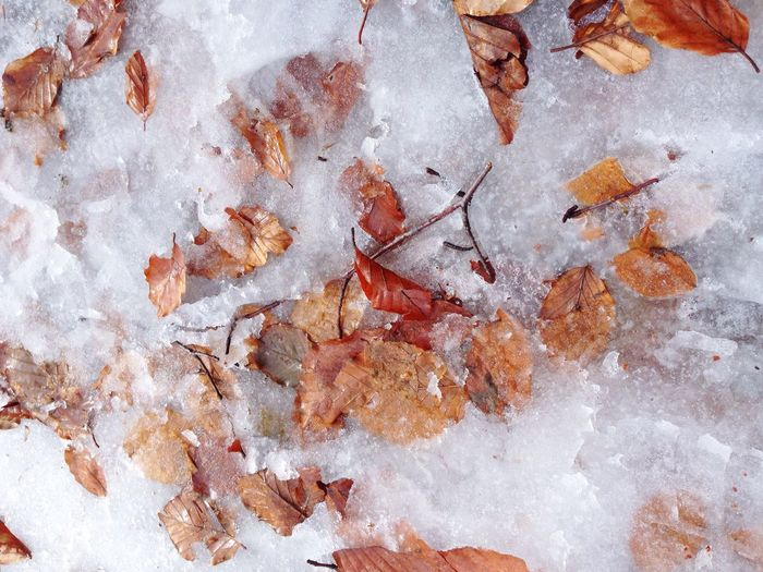 Autumn leaves on snow covered field